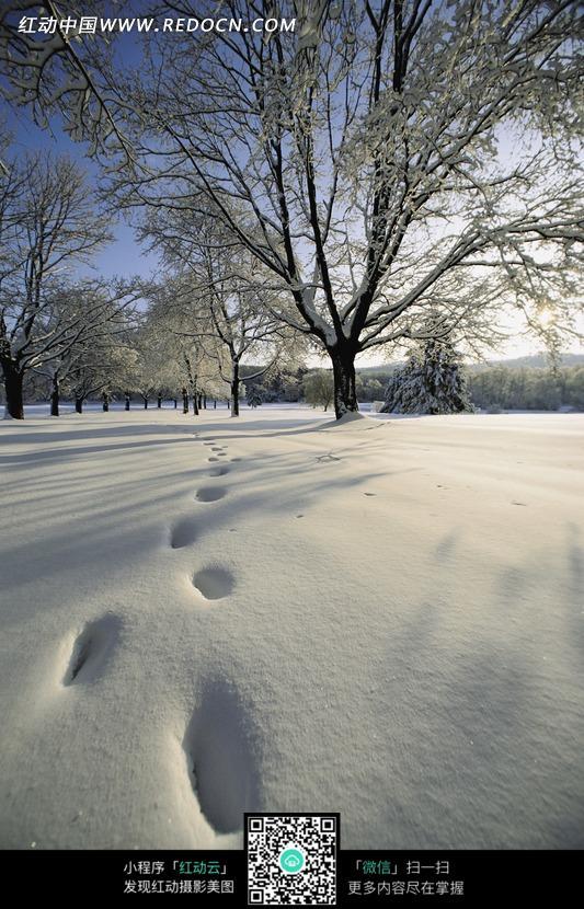 雪地上一深一浅的脚印图片免费下载 红动网