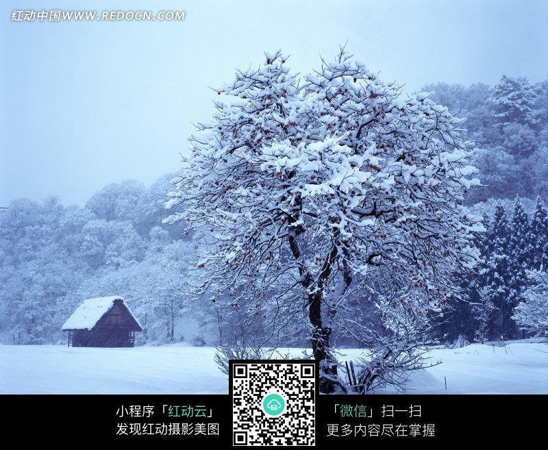 免費素材 圖片素材 自然風光 自然風景 被大雪覆蓋的小木屋和樹林  請