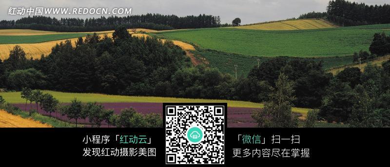 满山绿色的树木与彩色的花田图片_自然风景图片