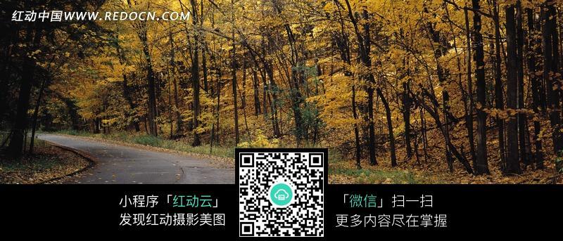 秋天丛林枯叶和小路图片_自然风景图片