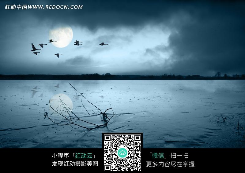 夜晚的月亮和海水里的枯枝图片