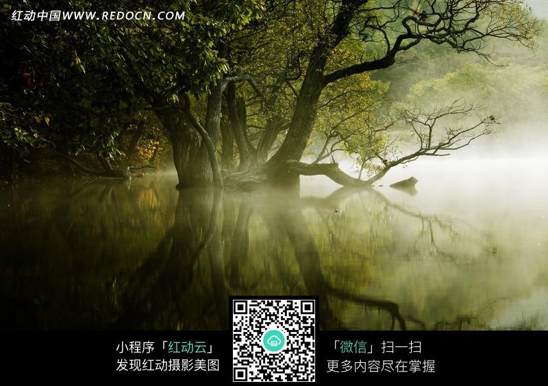 水上生长的大树特效图片