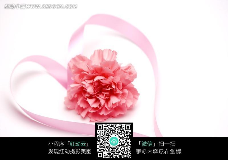 粉色爱心形丝带与粉色康乃馨图片