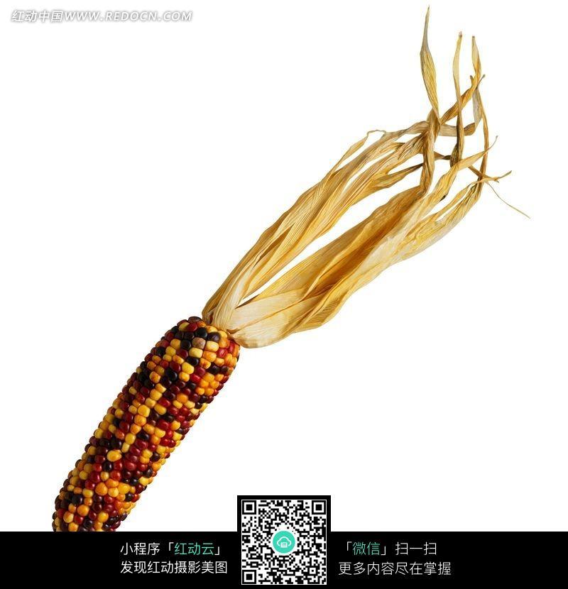 彩色玉米特写图片
