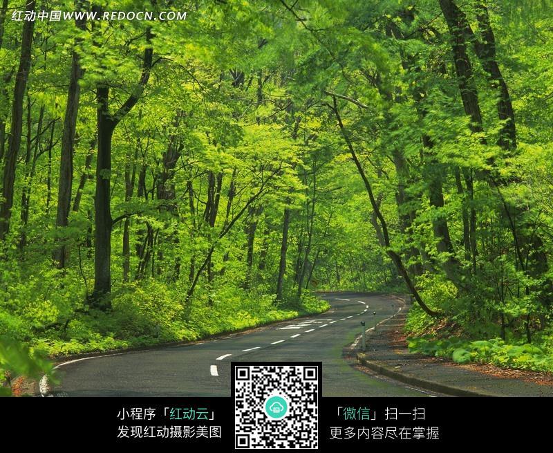 免费素材 图片素材 自然风光 自然风景 树林之间弯曲的公路  请您分享