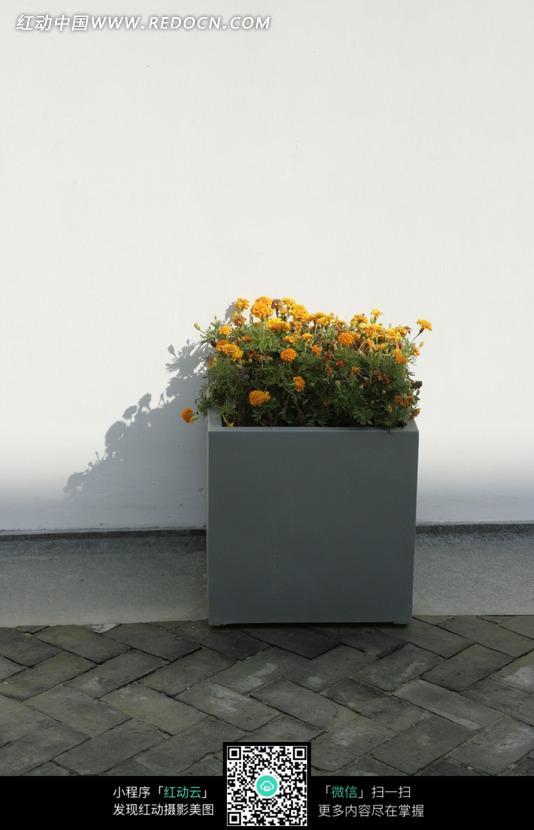 白墙边的方形花坛_室内设计图片