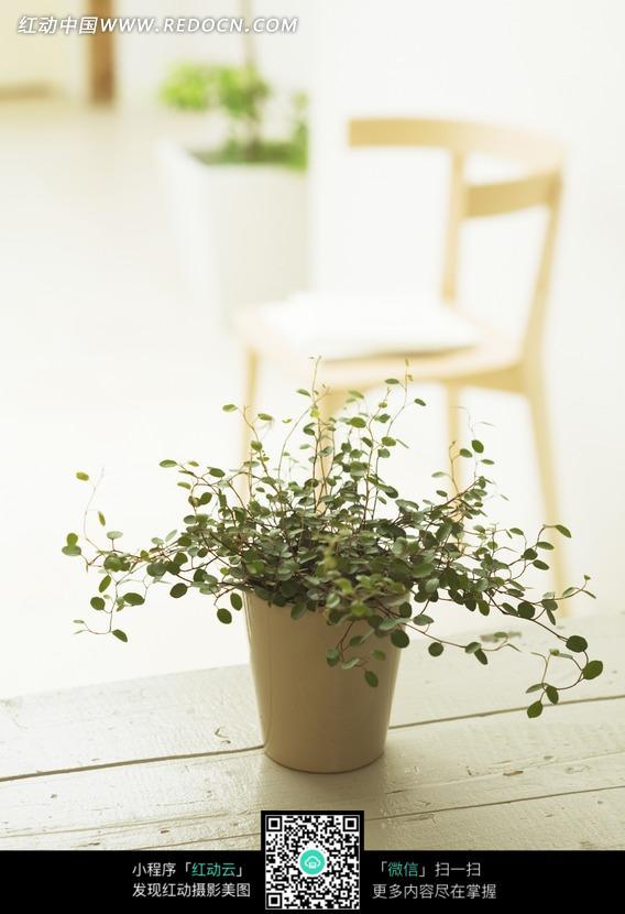 盆子里的圆形叶子的绿色植物图片