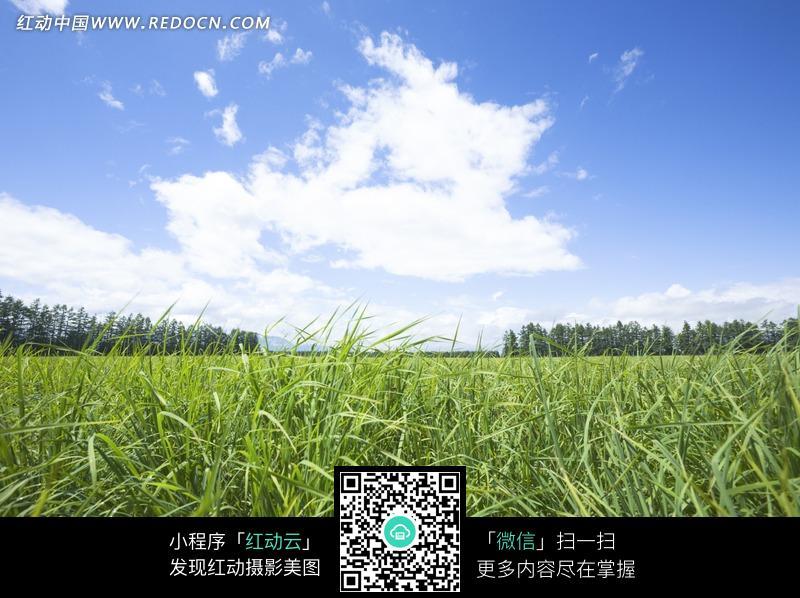 免费素材 图片素材 自然风光 自然风景 蓝天下被风吹倒的小草  请您