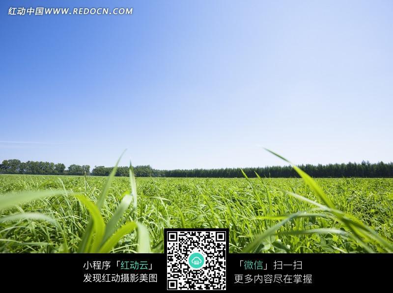免费素材 图片素材 自然风光 自然风景 草原上被风吹动的小草  请您