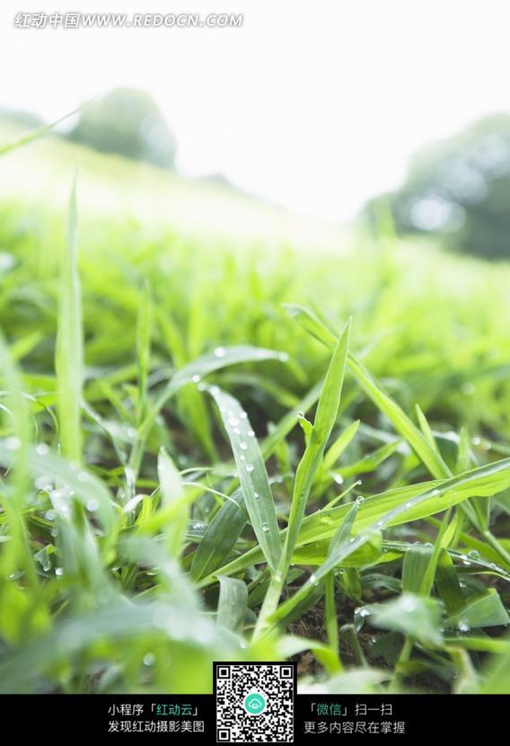青草上的露水图片_自然风景图片