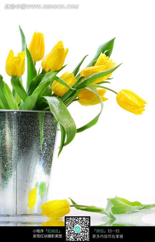花瓶里的郁金香图片_花草树木图片