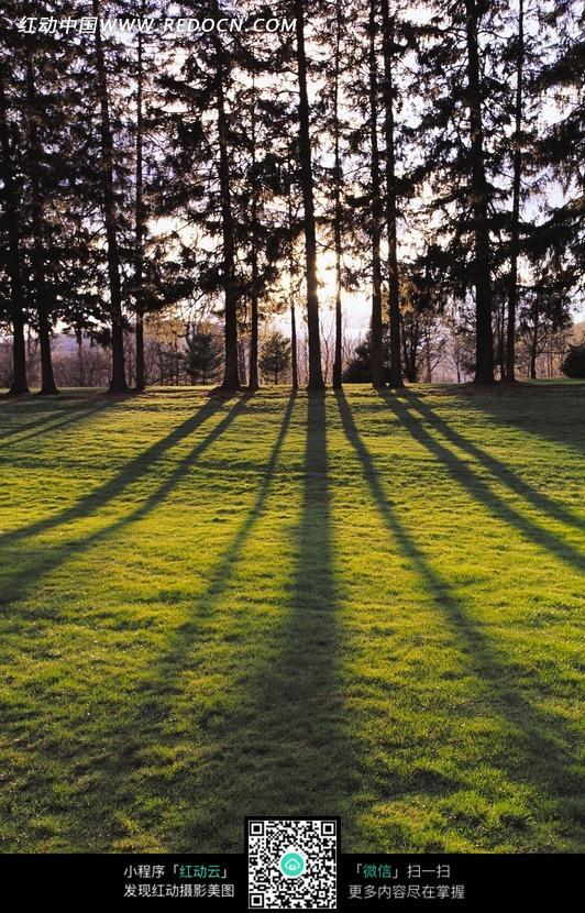 树林和草地上的树林影子图片_花草树木图片