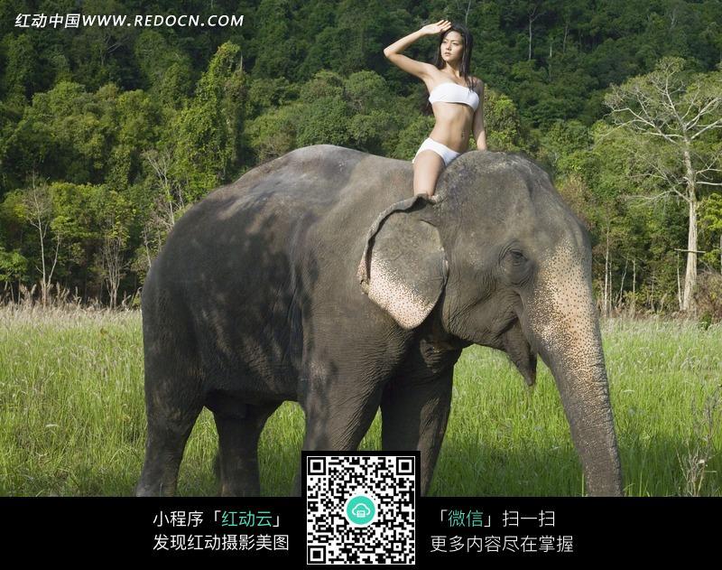 骑在大象上的外国美女图片