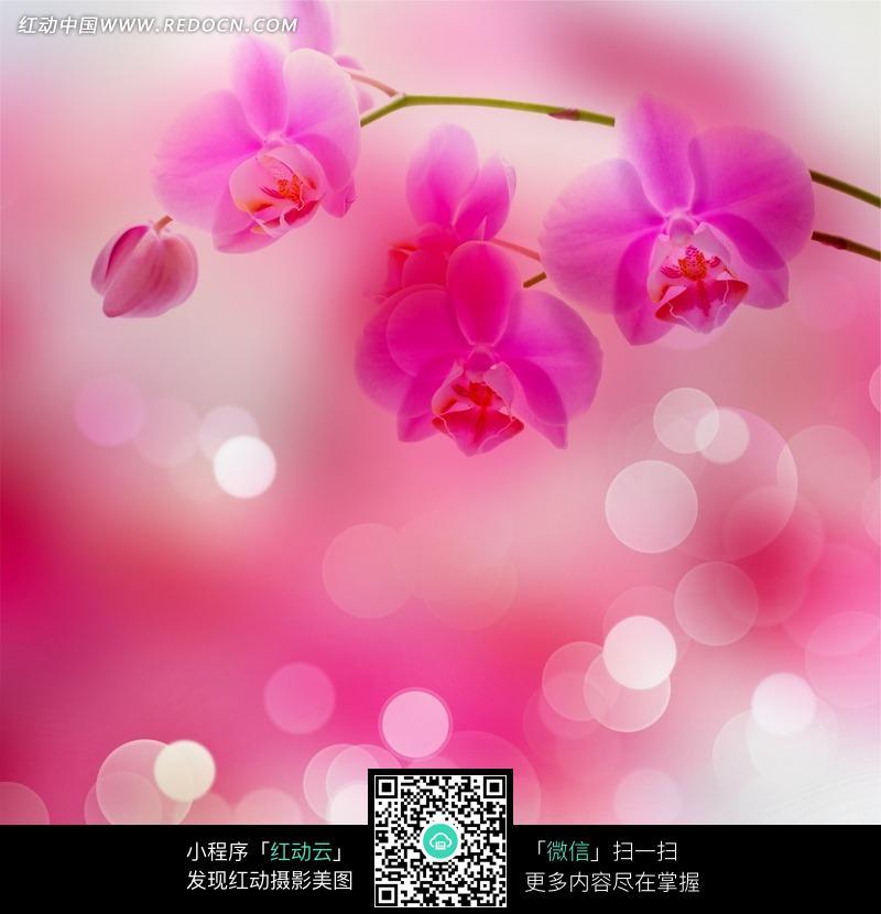 唯美光晕兰花图片_花草树木图片