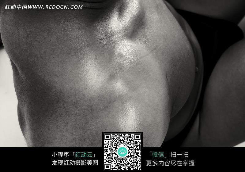 肌肉 肩部/男子肩部的肌肉特写