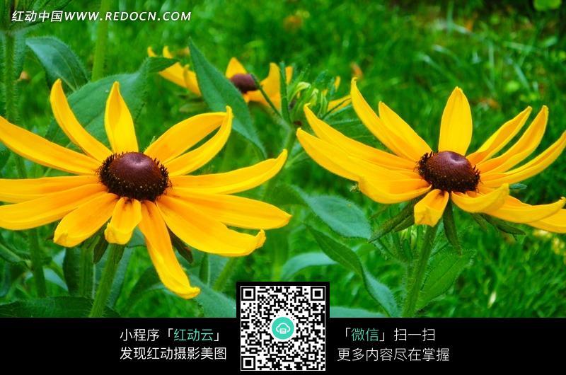 绿草地上的漂亮黄色花朵