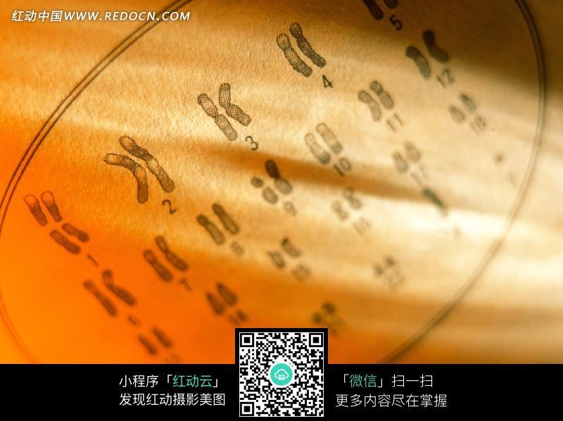 泛黄纸张上的染色体图片免费下载 红动网图片