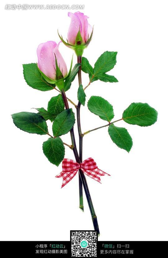 蝴蝶结系着的两支粉色玫瑰花