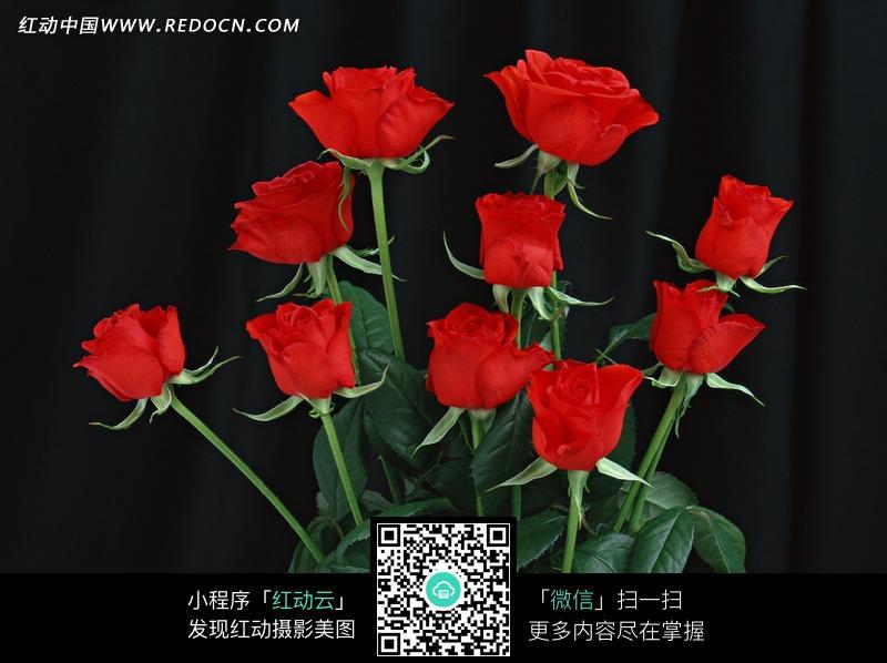 一束红色玫瑰花图片