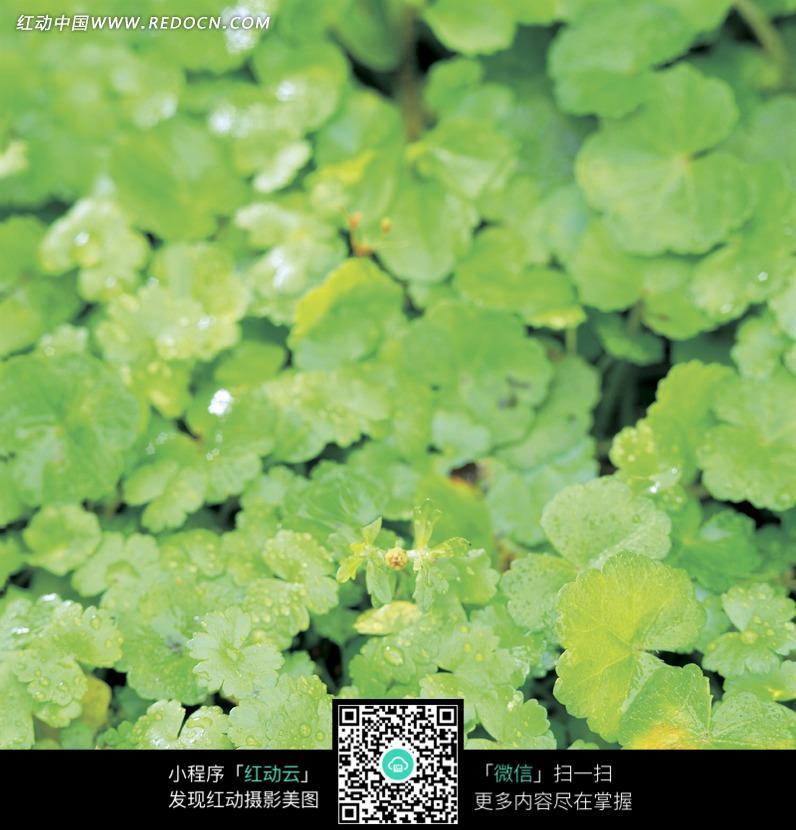成长的力量 鲜花 绿叶 高清图片