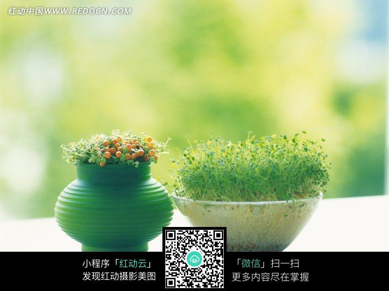 阳光 风景 盆栽 绿色花盆 植物 花卉 摄影图片 图片素材  植物图片