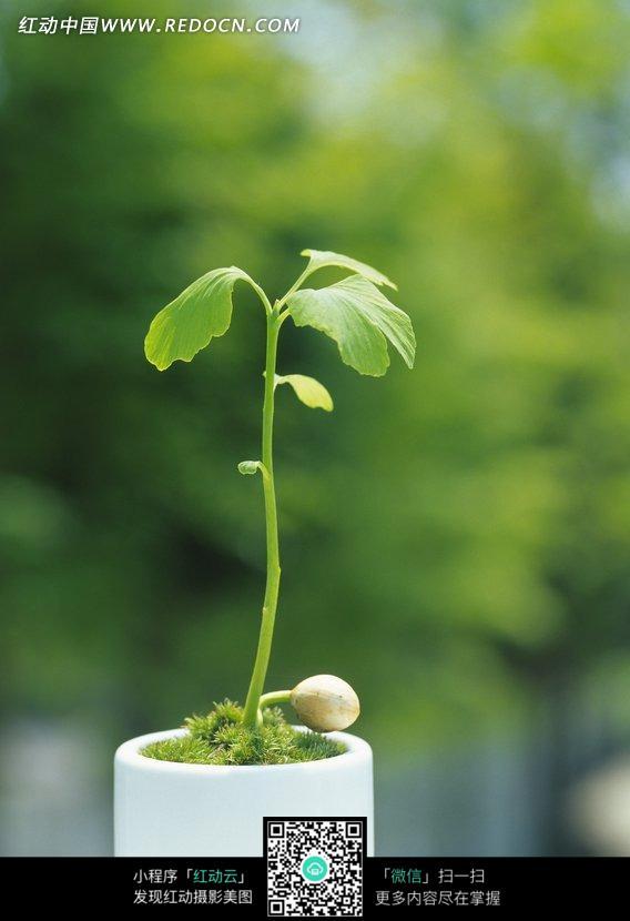 免费素材 图片素材 生物世界 花草树木 盘载里长出的翠绿幼苗  请您