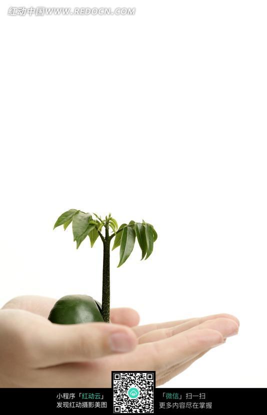 双手托着一株绿色植物图片