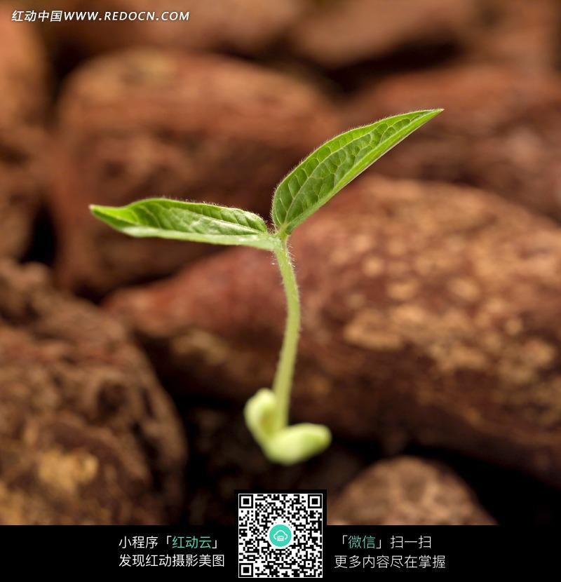 ppt树木生长过程