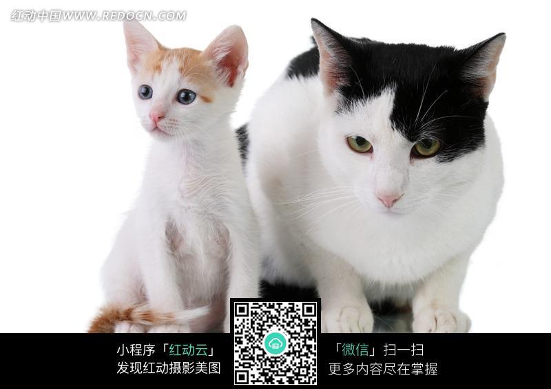 猫咪 可爱 两只 一胖一瘦 宠物 动物 动物图片 动物照片 摄影图片