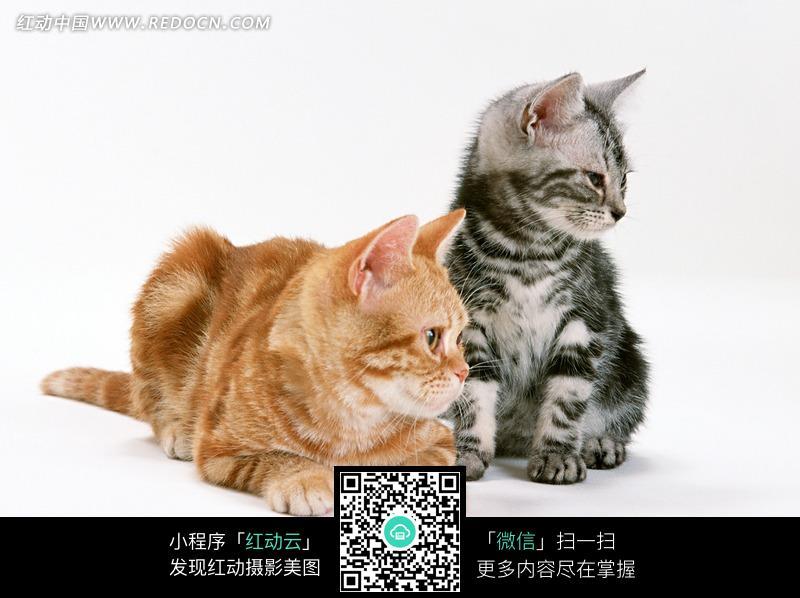 小猫穿裙子简笔画-趴着地上两只可爱的小猫咪图片 1068791