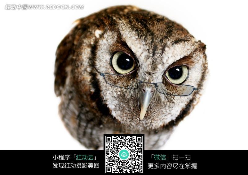 素材描述:红动网提供陆地动物精美素材免费下载,您当前访问素材主题是戴着眼睛的一只猫头鹰,编号是1069643,文件格式JPG,您下载的是一个压缩包文件,请解压后再使用看图软件打开,图片像素是2660*1773像素,素材大小 是1.67 MB。