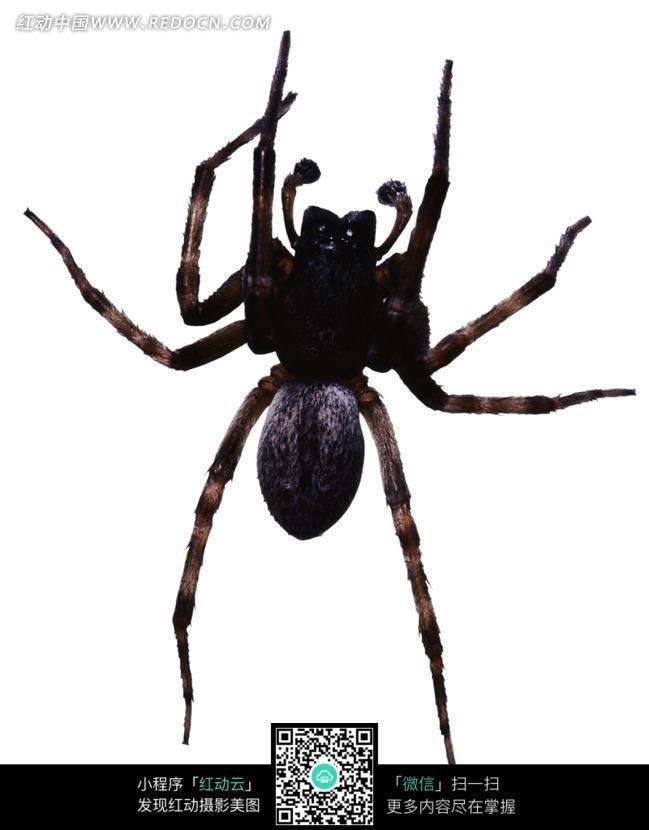 梦见蜘蛛和蛇,请高人解梦:    蜘蛛)    男人梦见蜘蛛,意味着自己的