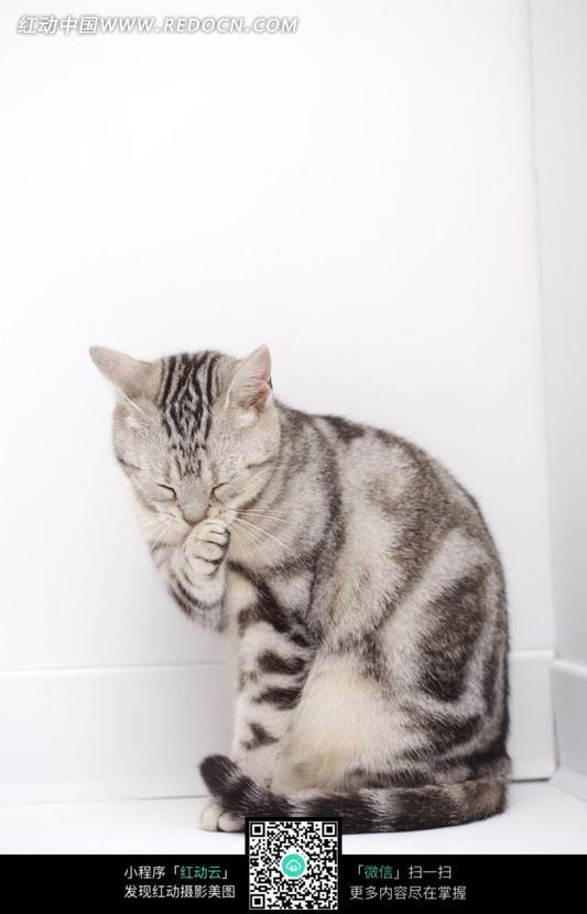 蹲在墙角 舔爪子 猫咪 猫 可爱 动物 宠物 动物照片 摄影图片 动物