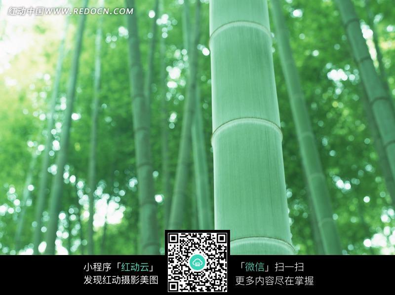 美丽的竹林风景图片图片