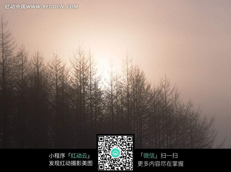 雾天茂密树林的大树剪影图片