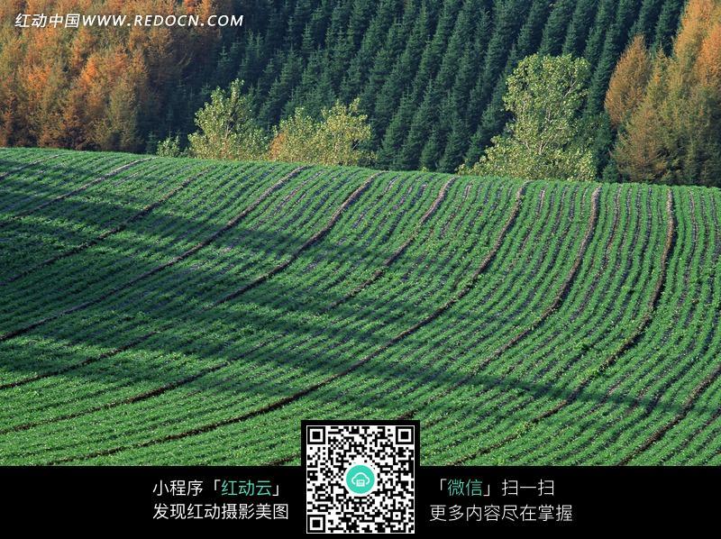 黑色影子 绿色田野 树林 黄色树木 美景  自然风光 风景图片 摄影图片