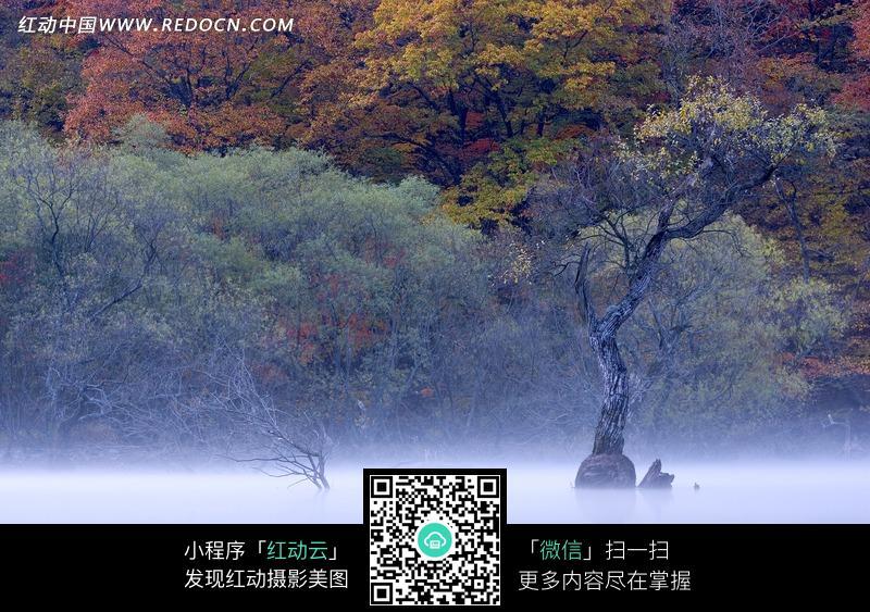 免费素材 图片素材 自然风光 自然风景 水面上的树木和水边的绚丽树林