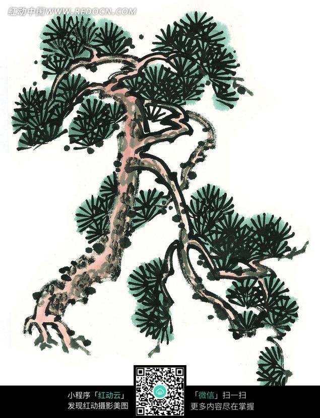 一棵松柏树写意画图片