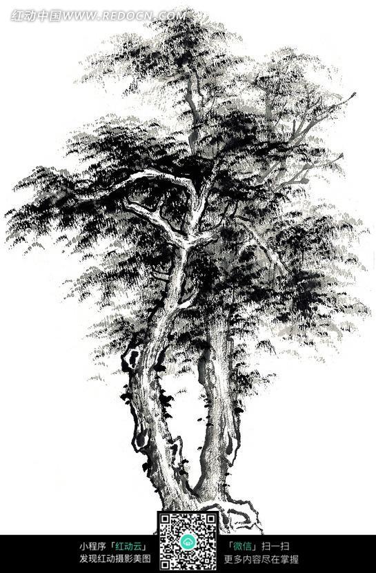 手绘松树平面图