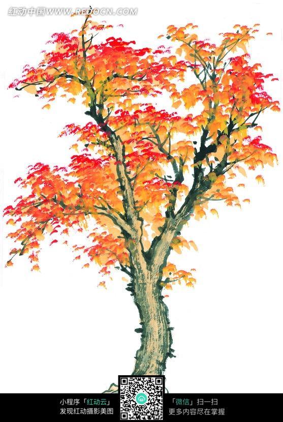 手绘彩色树叶植物插画图片