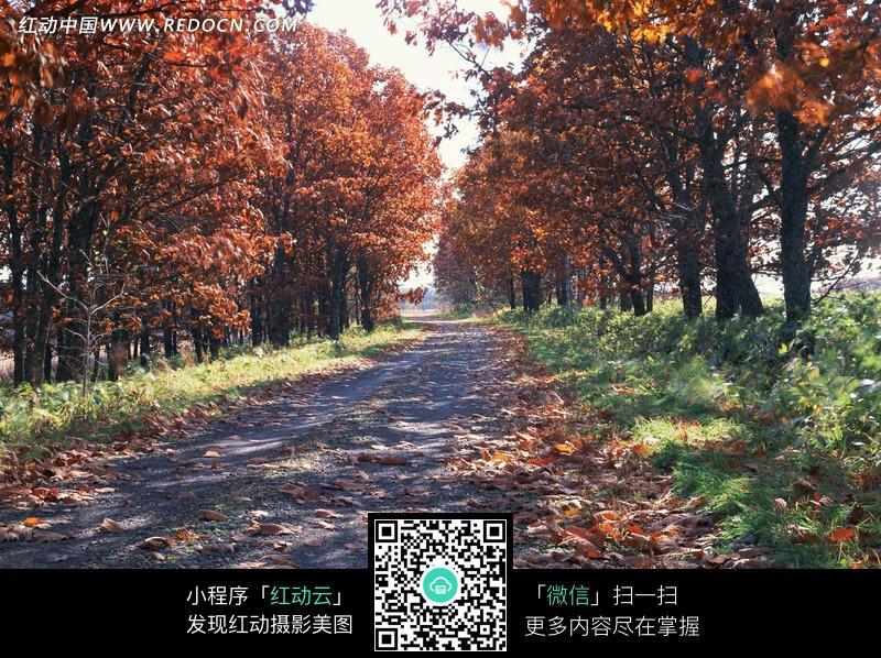 免费素材 图片素材 自然风光 自然风景 小路落叶特写