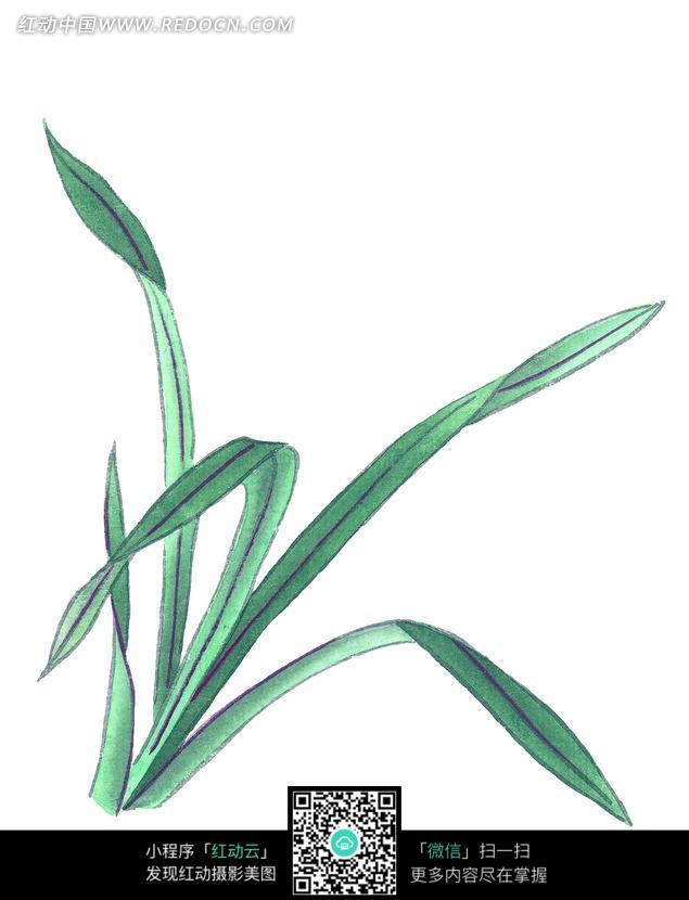 绿色的叶子工笔画图片