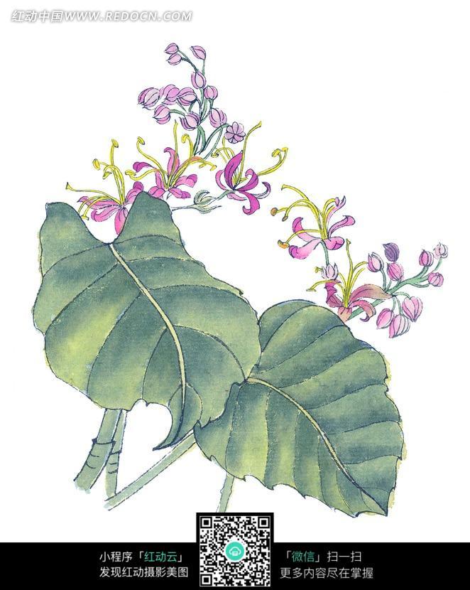粉色盛开的花朵和绿叶工笔画