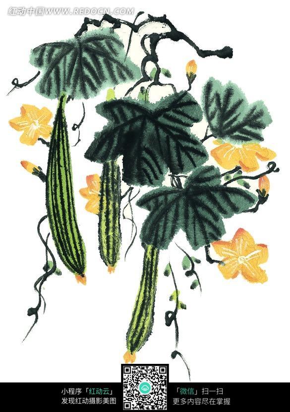 墨绿色叶子下的丝瓜水墨画图片