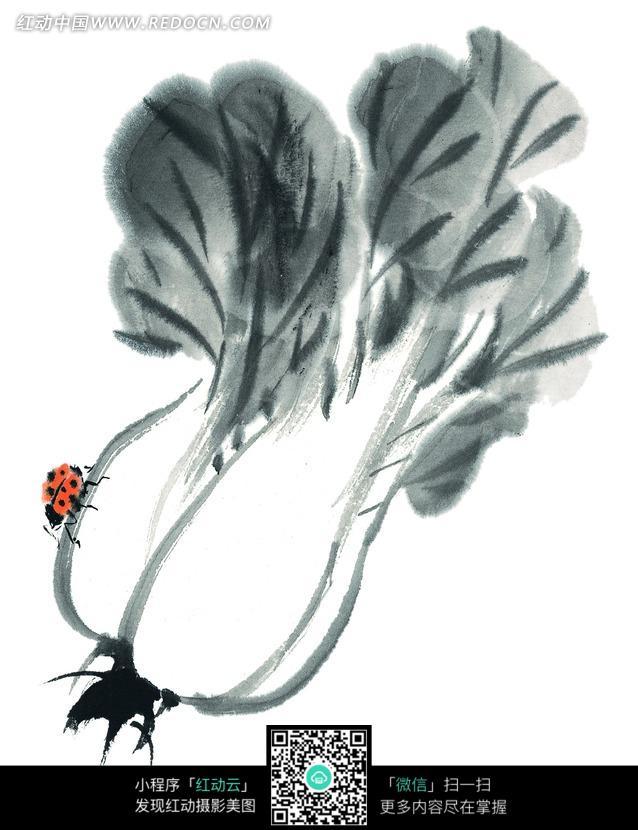 白菜根上的瓢虫水墨画图片