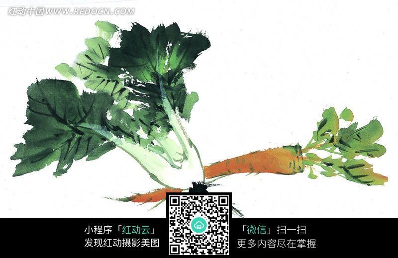 白菜和胡萝卜水墨画图片