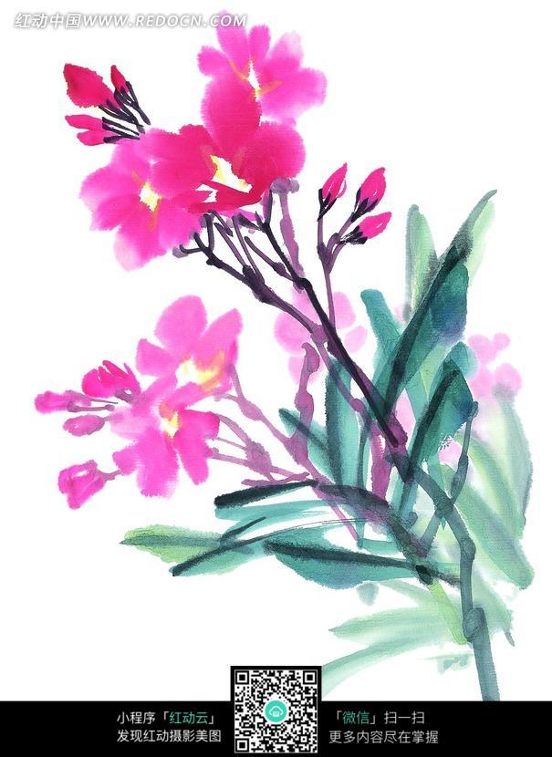 朵和花苞水墨画图片
