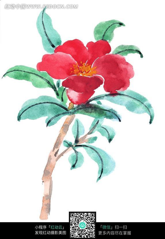 盛开的石榴花和叶子水墨画图片