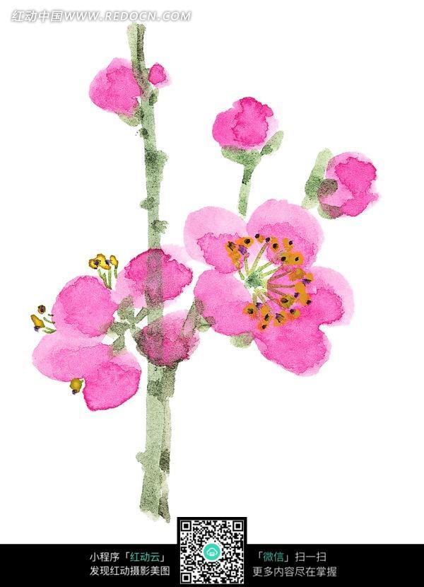 一枝梅花写意画图片