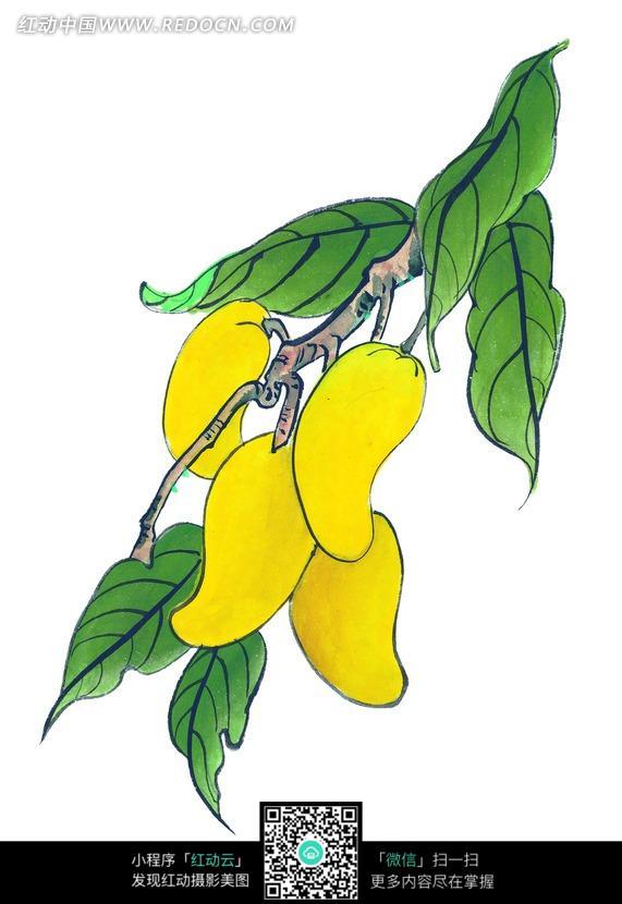 手绘芒果图片